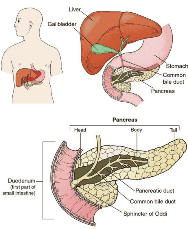 Ендокрина функција на панкреасот