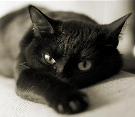 Панкреатит кај мачки: знаците, симптомите