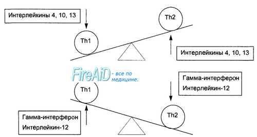 Т-лимфоцити население. Субпопулации на Т-лимфоцити. CD4 Т-лимфоцити. CD8 Т-лимфоцити.