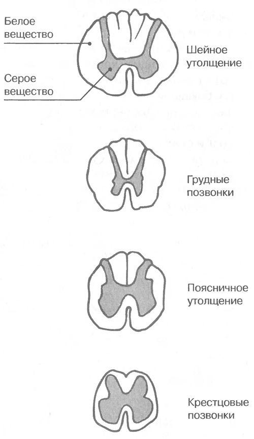 mozg76.jpg