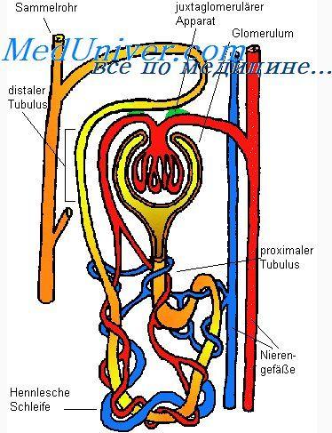 Povezava med vonjem in vestibularne funkcije. žrela funkcija sesanju in požiranju