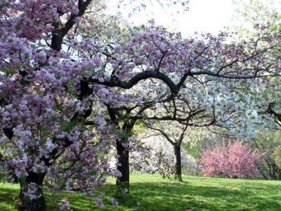 Тајните на расцветани шуми