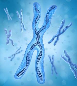 Трисомия по хромосоме 13