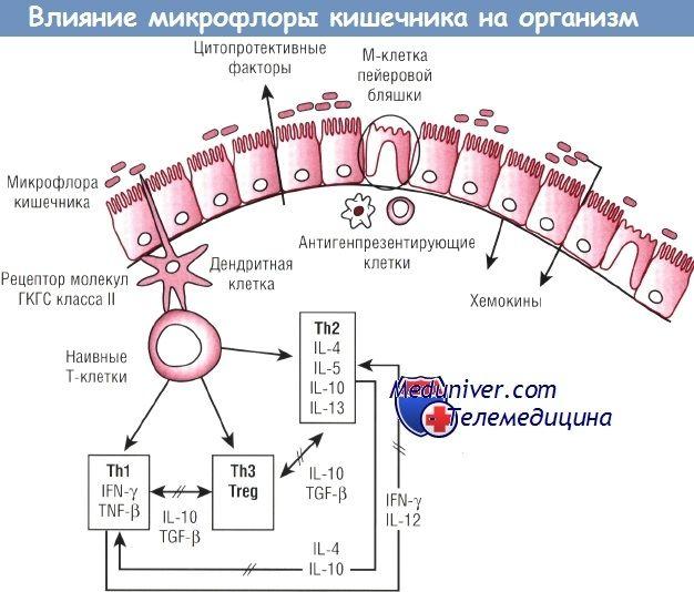 Efectul asupra microflorei intestinale ale organismului