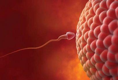 Внутренние ощущения женщины: овуляция, менструация, оплодотворение