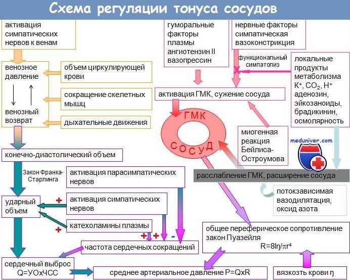Дисфункция эндотелия сосудов у взрослых при задержке внутриутробного развития (звур)
