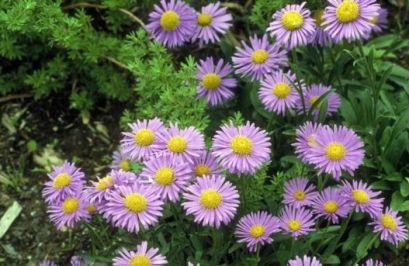 Одгледување на украсни растенија