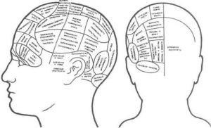 Высшие психические функции