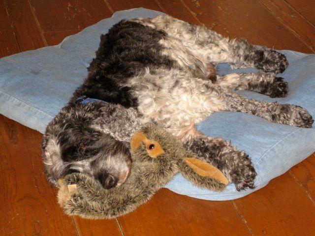 Напад на панкреатит кај кучињата
