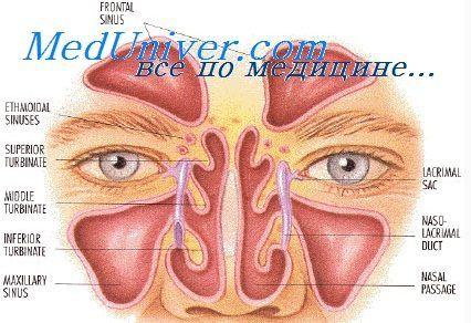 Nosni votlini telo. Odnos nosne votline z drugimi organi in sistemi