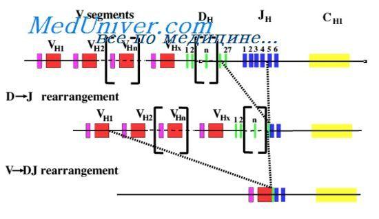 потиснување крути V-гени